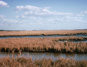 Blackwater National Wildlife Refuge includes more than 27,000 acres of woods and wetlands.
